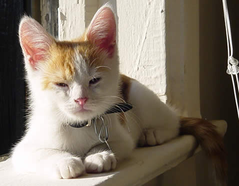 Orange and white kitten sitting on the window sill.
