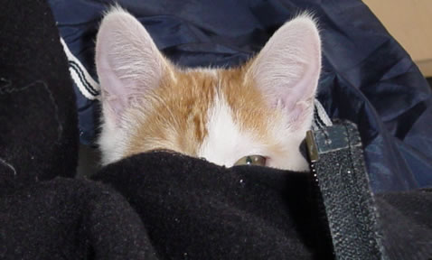 Kitten stalking the camera.