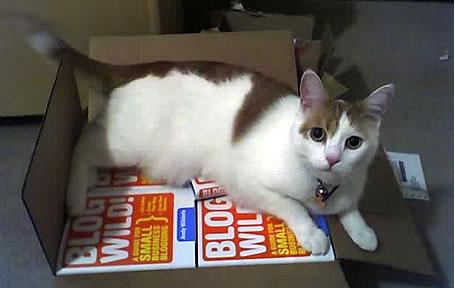 My cat checks a shipment of books.